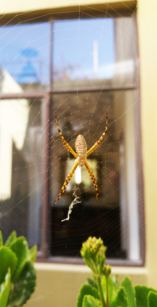 guadalupeweb