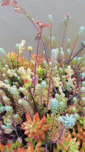 succulentsdetailweb