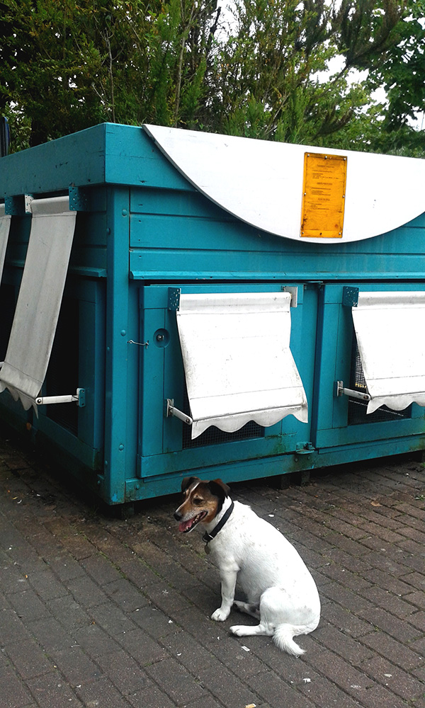 Billie doesn't know he's posing next to a kennel - by the shopping mall