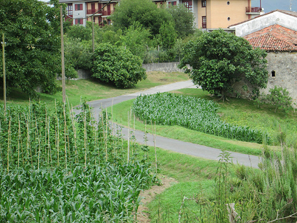 On the outskirts of the town there are larger houses with large vegetable gardens (huertas).